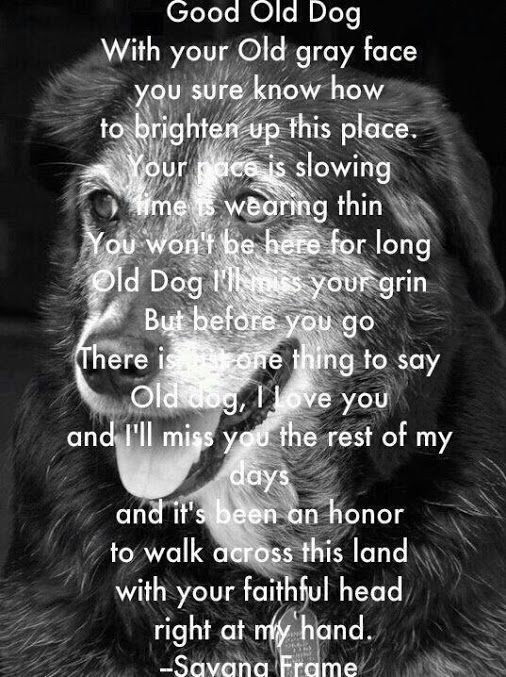 Rich Miller - Google+ - ~Good Old Dog~ This applies to any animals pets we love n…
