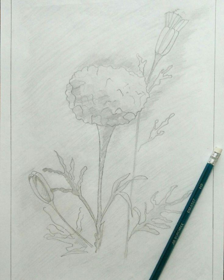Картинки гвоздик карандашом