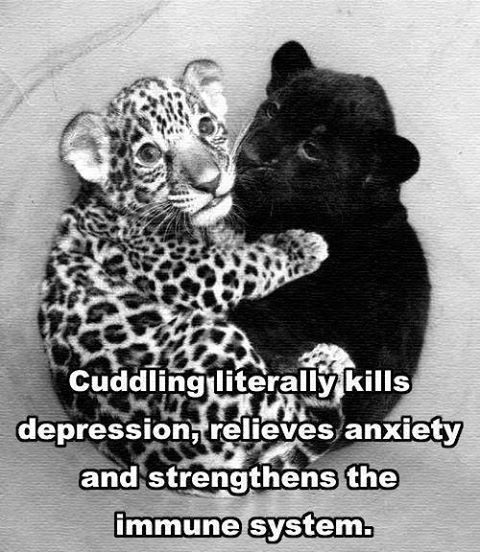 Cuddling Quotes And Sayings: 30 Best Images About Cuddles On Pinterest