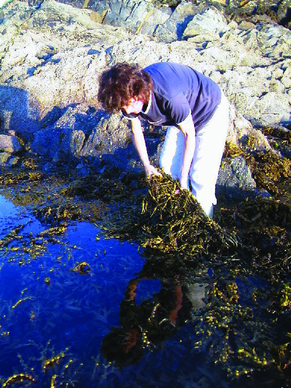 how to make fermented seaweed extract