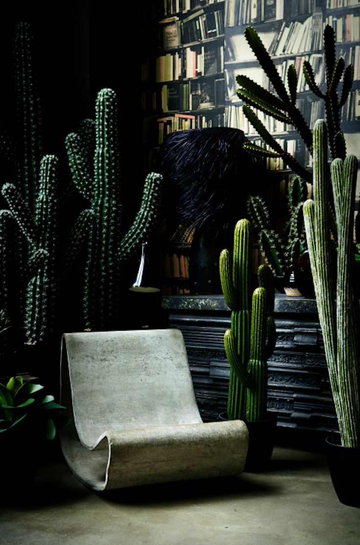 Bring the outdoors in. Cactus collection by abigailahern.com.: