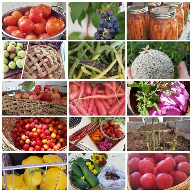 Growing a Garden – Home Love