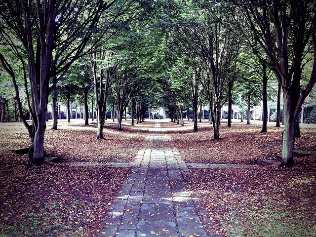 The Tree Cathedral - Milton Keynes | Flickr