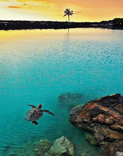 Turtle | Big Island, Hawaii