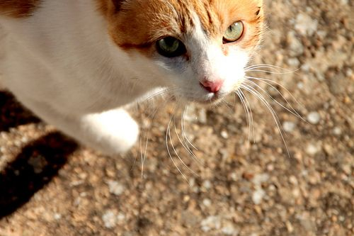 Are you looking to me? by sergioski1982 #Cats #Gatos #FotoGatetes