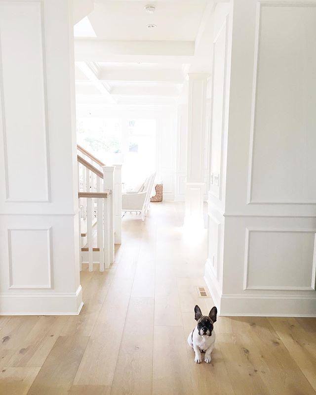 french bulldog hardwood floors benjamin moore simply white