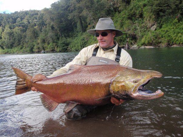Monster Chinook Salmon