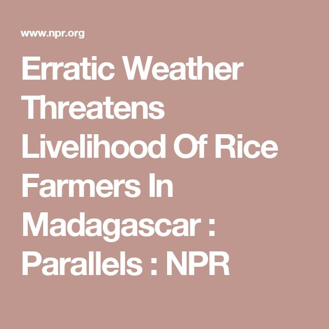 Erratic Weather Threatens Livelihood Of Rice Farmers In Madagascar : Parallels : NPR