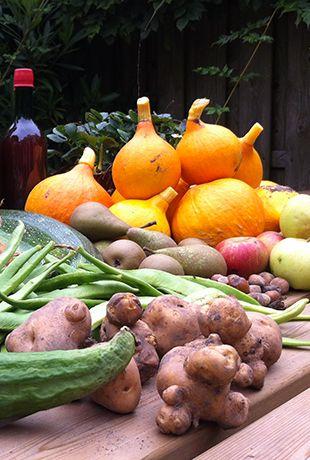 OogstOverschot - Stichting OogstOverschot is een non-profit organisatie en heeft als doel bij te dragen aan een duurzame samenleving door verspilling van voedsel en goederen tegen te gaan