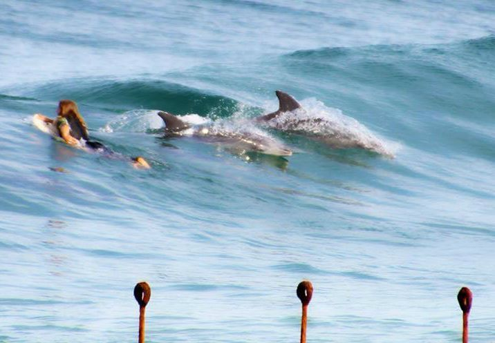 surfing with dolphins Newcastle Australia