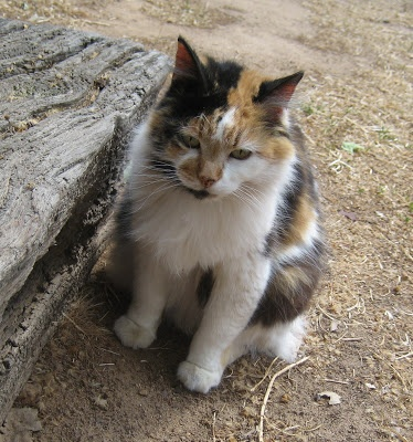 Patches the old c.d cat