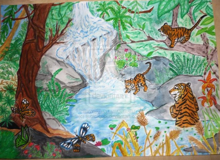 tropical rainforest animals drawing tropical rainforest