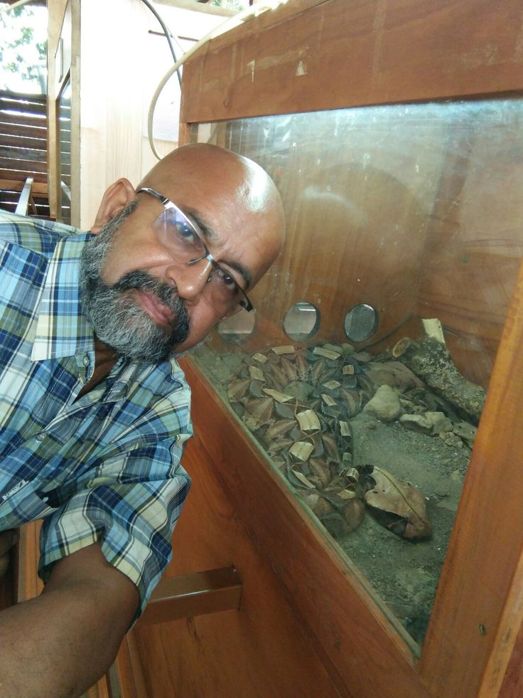"""Tuesday (9/1/2018) : -Tuesday (9/1/2018)Kandt Museum of natural history in Kigali.Seafarer/Blogger/Traveller Rudolph.A.Furtado with the the """"Gabon Viper"""""""