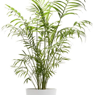 168 best House plants images on Pinterest | Indoor plants, Indoor ...