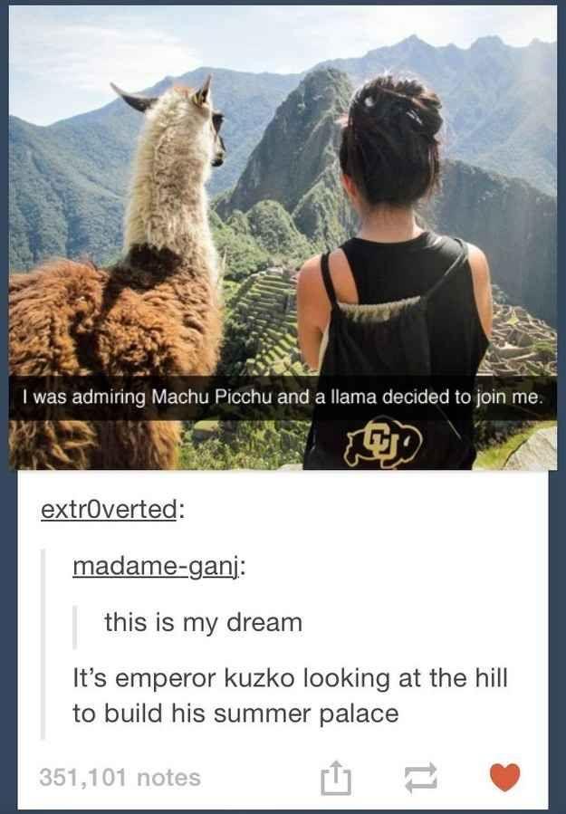 Disney realizations.... Hahaha  This real-life Emperor Kuzko: