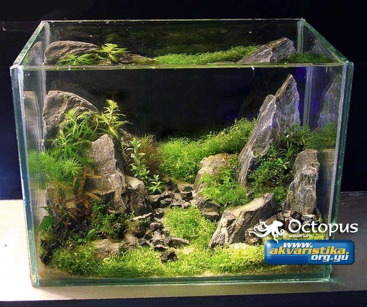 2 litre nano tank aquarium best aquascaper in serbia for Small fish tank with waterfall