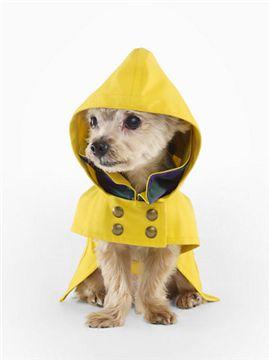 Нужны модели? Собаки из приюта сыграли в видео-клипе осенней коллекции Ральфа Лорена | Короткие Истории Длинной Таксы