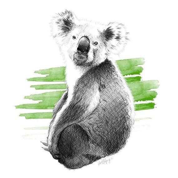 Koala Art And Design : Ideas about koala illustration on pinterest animal