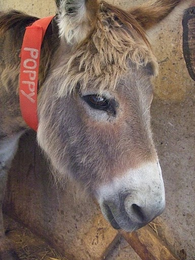 The Donkey Sanctuary of Canada, Guelph, Ontario, Canada