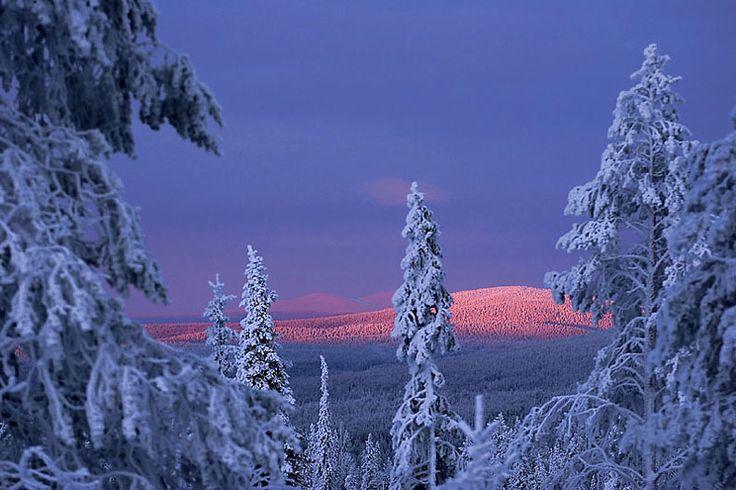 Ylläs/ Lapland, Finland
