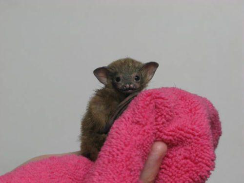 OOAK Baby Bumblebee Bat, Realistic Handmade Poseable ...
