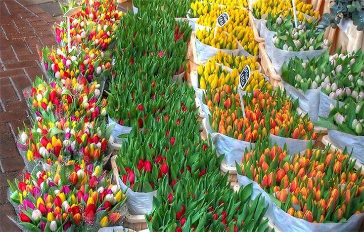Плавучий цветочный рынок в Амстердаме.