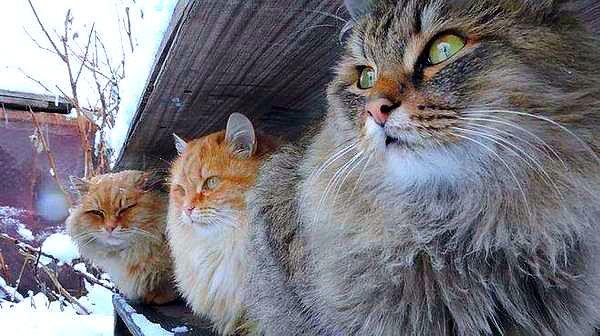 (48) Одноклассники   Суровая сибирская братва - это вам не лысые египетские кошки!