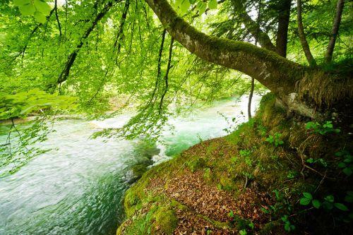 Valeriu Popa - Curatarea limfei - Tratamente naturiste si dieta | Cure