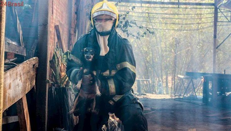 Bombeiros resgatam cadela e filhote recém-nascido de incêndio