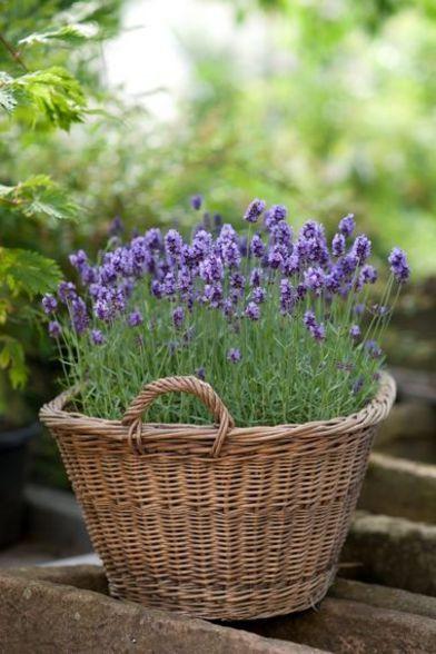 panier de fleurs en guise de pots de fleurs