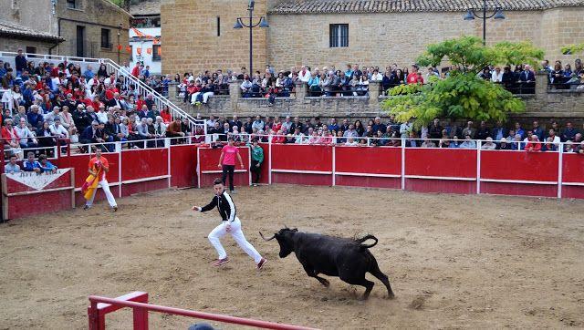 Santacara: Vacas Merino de Marcilla en Santacara (1)