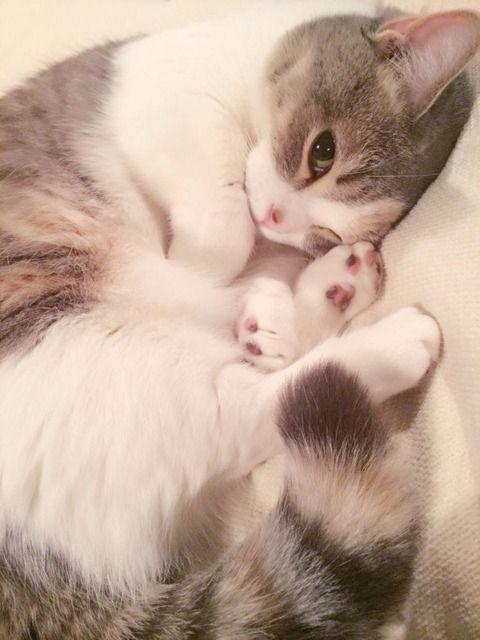 meowneko: mariusu: (via この猫より可愛い猫って存在するんか?(画像アルヨ) : 〓 ねこメモ 〓) oh my god