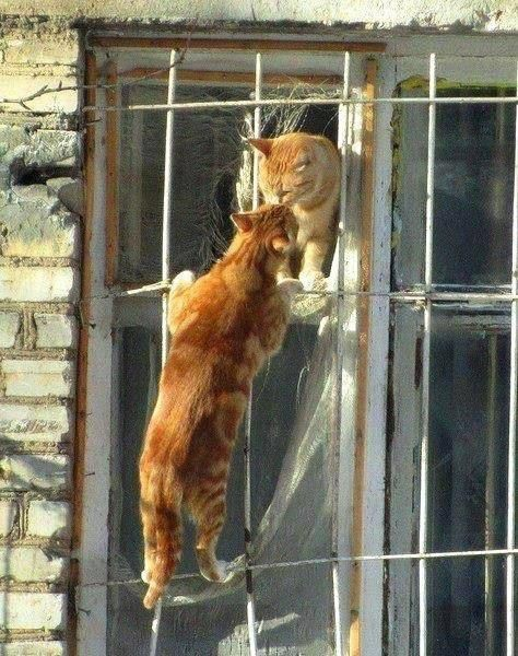 Romeo and Juliet…