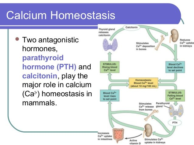 calcitonin and pth relationship with