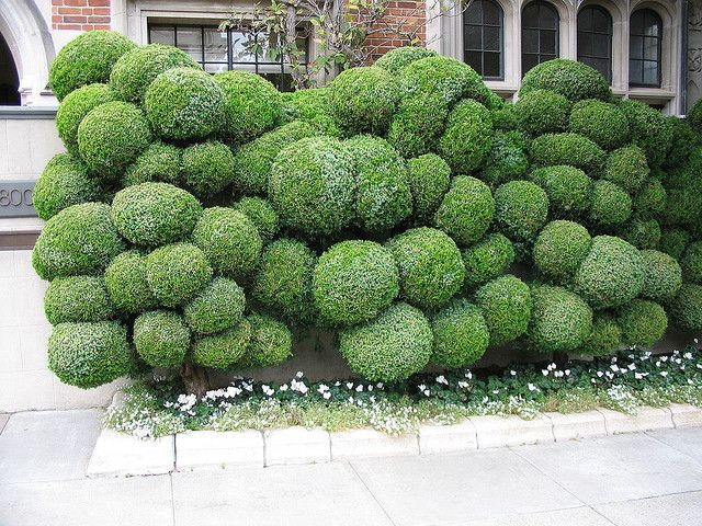 Bubble hedge - this is so cool its almost creepy.  I love it.