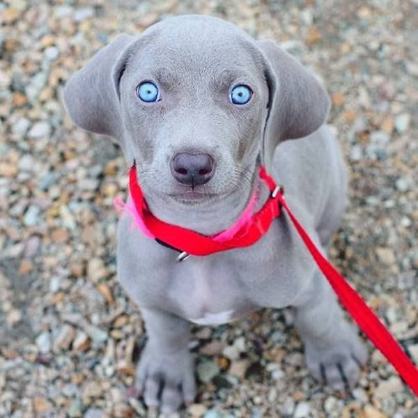 This blue eyed dog is just begging for you to aww. https://i.redd.it/lmquhpbuvwc01.jpg