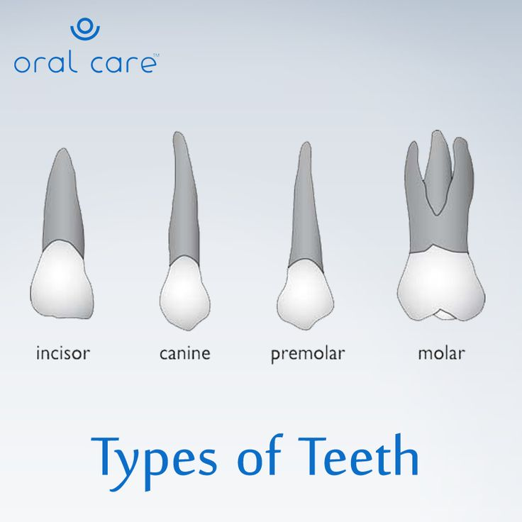 DidYouKnow‬ ? We have four different types of teeth, and ...