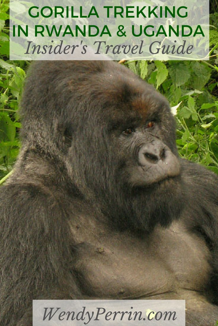 Rwanda is famous for its gorillas, but it's a little-known destination for chimpanzee trekking too. Get more great insider tips from our East Africa expert.