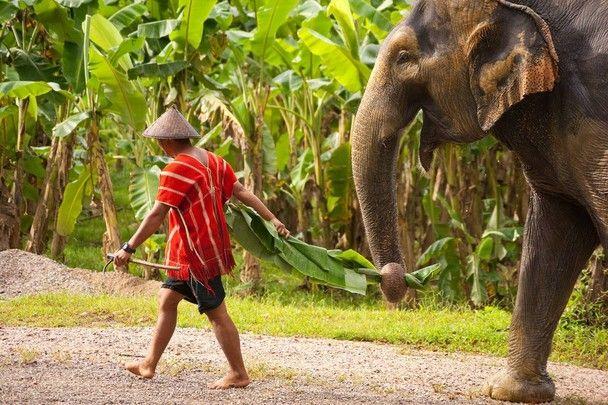 Elefantenerlebnis im Khao Sok Nationalpark.
