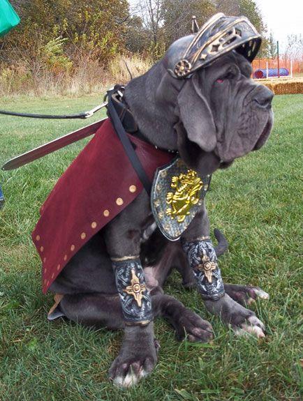 gladiator mastiff