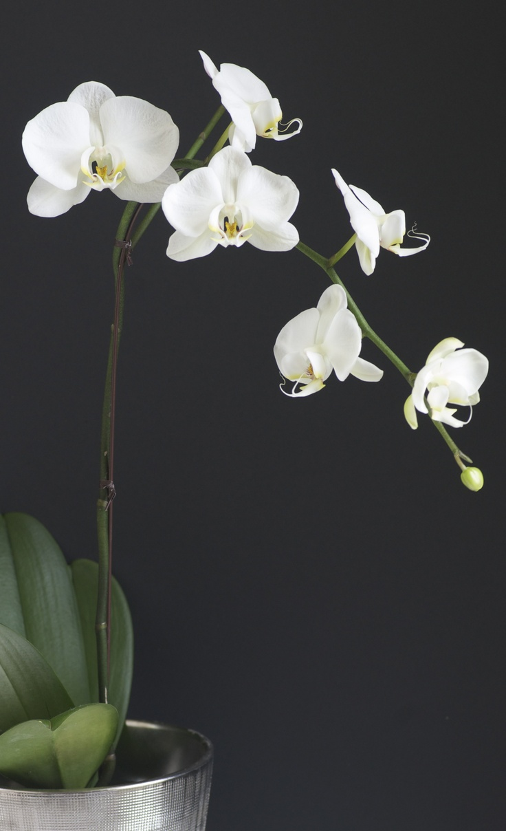 orchid...gotta have at home...actually have two!