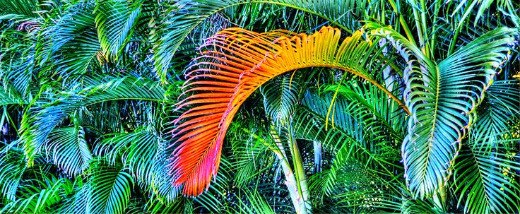 TROPICAL BEAUTY BY TATIANA LOPATINA.  VISIT OUR WEBSITE FOR MORE GREAT IMAGES www.lailas.com