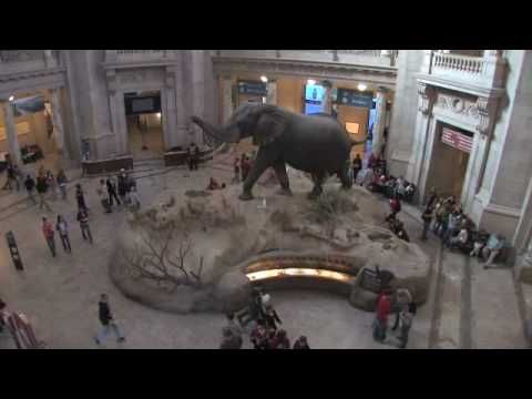 Welcome to the Smithsonian. This orientation video outlines some of the most exciting exhibits in this Smithsonian museum. Created for students, the video also illustrates a few museum dos and don'ts.