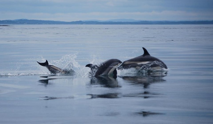 Whale-Watching Kayaking on the Bay of Fundy - New Brunswick Shore