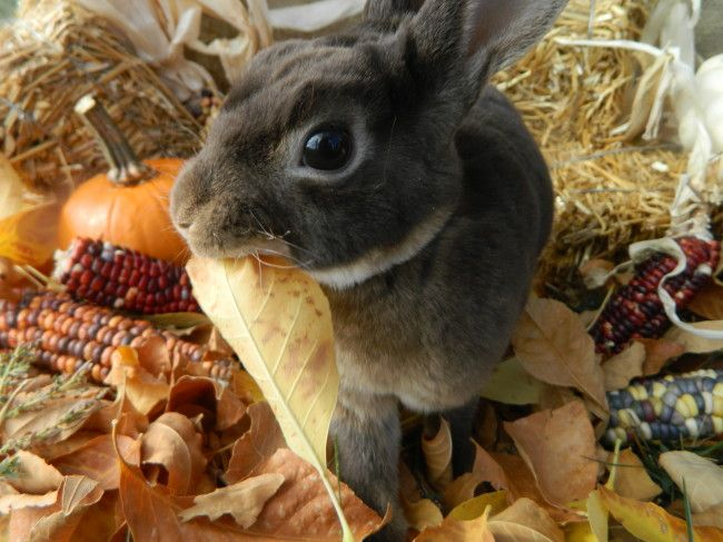 1000 Images About Bb On Pinterest: 1000+ Images About Autumn Leaves, Bunny Rabbits Stay! On