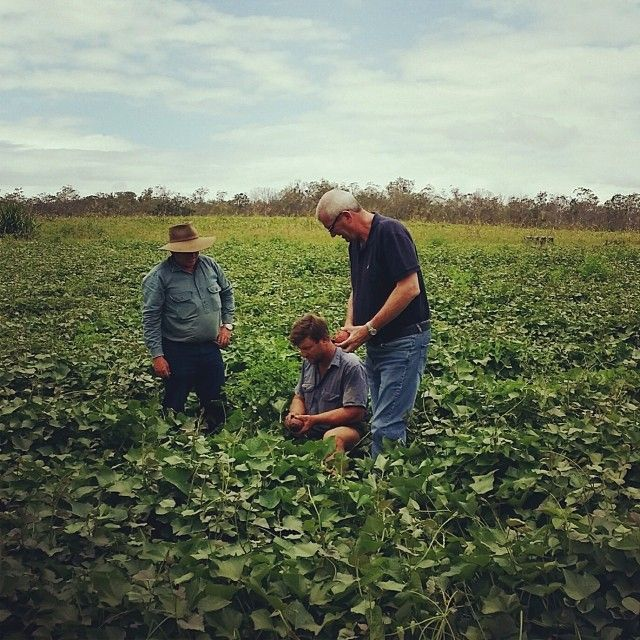 Captured: Craig Spencer keeping it fresh with one of our brilliant partners, Jeff Skilton. #ginger #sweetpotato #northqld