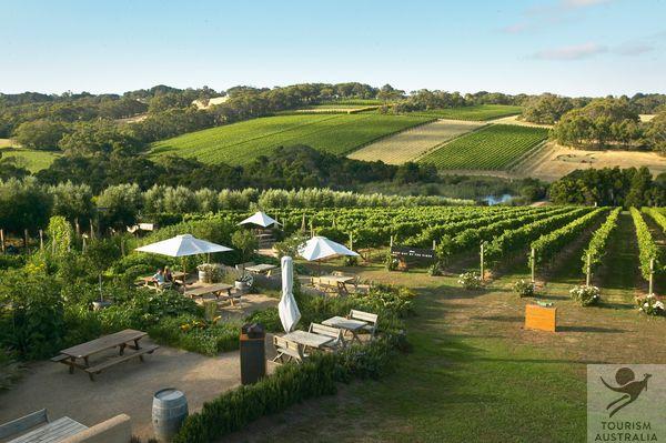 Montalto Winery & Olive Grove, Mornington Peninsula, Australia