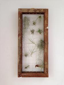 'Framed Greenlife' from Bloodwood Botanica