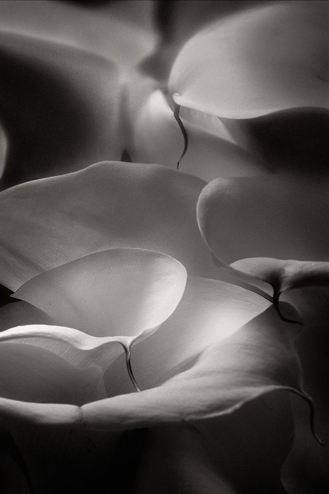 *black and white photography, flowers, details* - Amazing Photography by Vincent Versace, From Oz to Kansas
