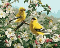 Plaid Paint by Number Kit (16 by 20-Inch), 21680 Goldfinches